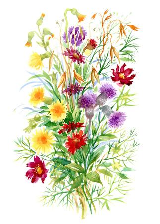 白地にカラフルな水彩野の花イラスト  イラスト・ベクター素材