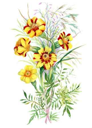wildflowers: Colorful watercolor wildflowers illustration on white background Stock Photo