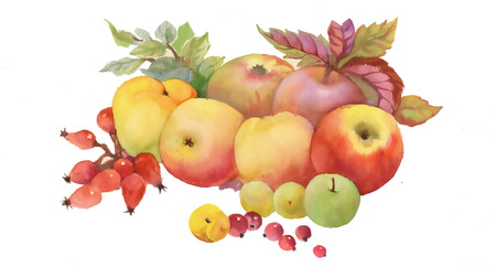 Painted autumn fruits and leaves on white background