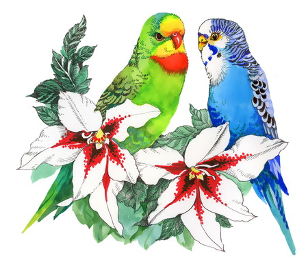 loros verdes: Loros en las flores, aisladas sobre fondo blanco