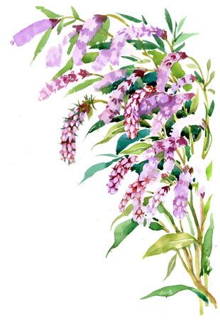 Watercolor violet field flower