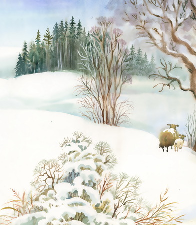 sheeps: Watercolor winter landscape with sheeps