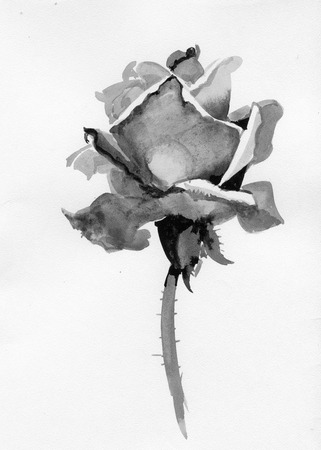 tone shading: Handdrawn rose in sketch-style, isolated on white background Illustration