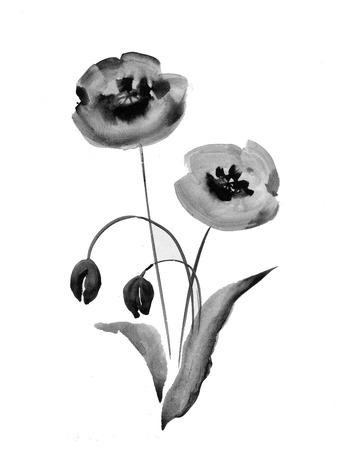 Poppy flowers watercolor illustration in black and white royalty poppy flowers watercolor illustration in black and white stock vector 37848478 mightylinksfo