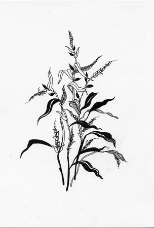 erva: Erva Handdrawn em-estilo do esboço Ilustração