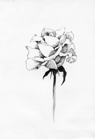 Handdrawn rose in sketch-style, isolated on white background Vettoriali