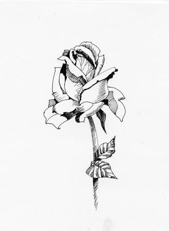 Handdrawn rose in sketch-style, isolated on white background Illustration
