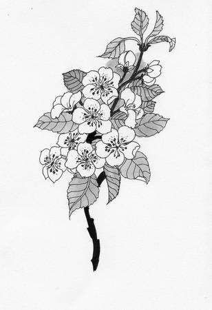 Flowering cherry branch in watercolor