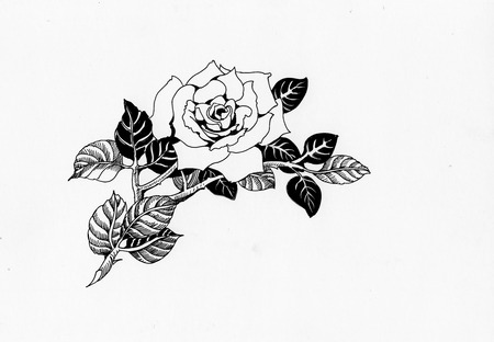 black roses: Handdrawn rose in sketch-style, isolated on white background Stock Photo