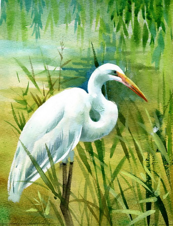 heron: Watercolor heron in water Stock Photo