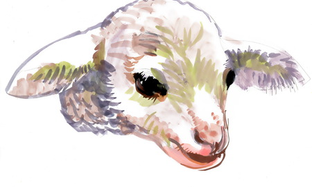 adolescence: Watercolor goatling on white background