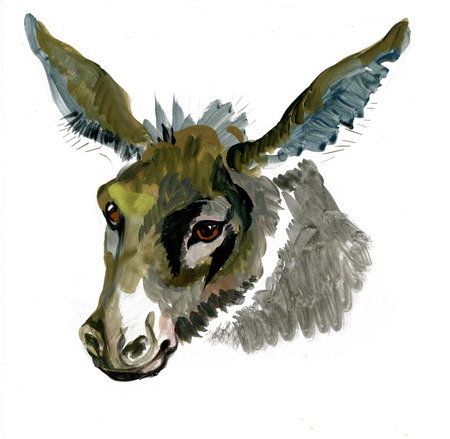 jackass: Watercolor donkey on white background
