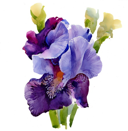 Beautiful iris painted in watercolor