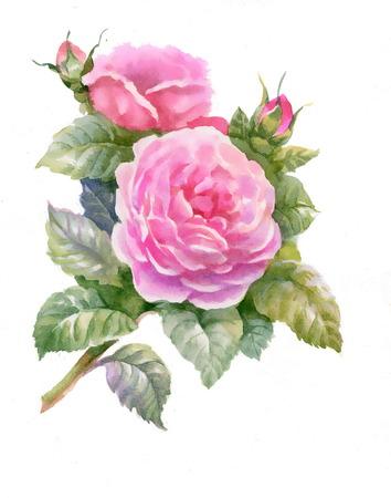 rose bud: Pink rose bud with green leaves Illustration