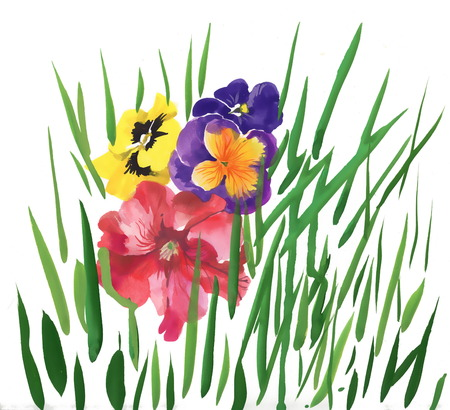 Colorful spring pansy wildflowers illustration illustration