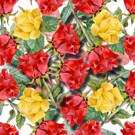 taffy: Floral colorful roses flowers pattern on white background