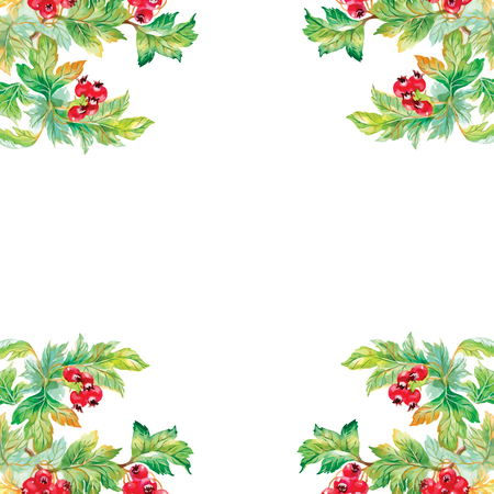 uncultivated: Wild flowers pattern on white background