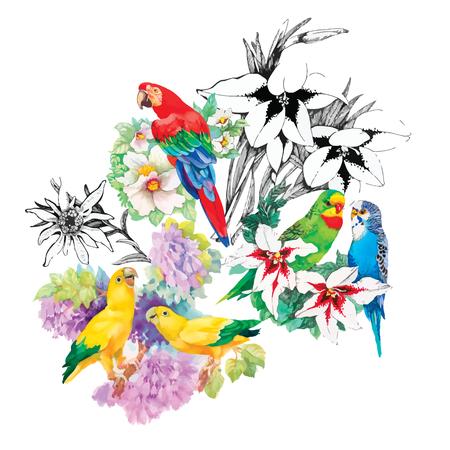 papagayo: Loros acuarela sobre un fondo floral. Patr�n sin fisuras.