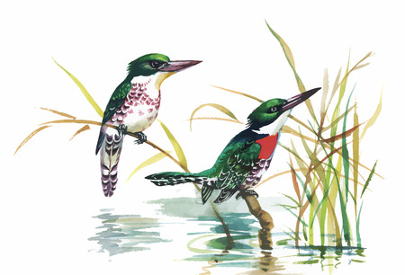 aves exoticas: Watercolor wild exotic birds on flowers.
