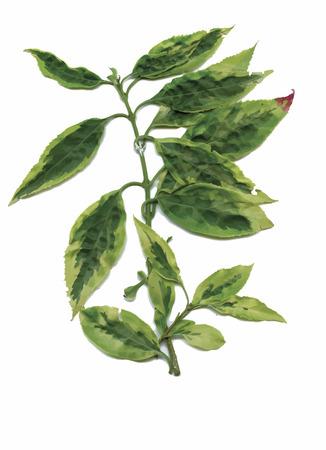 dry flowers: Dry herbarium plants. flowers and leaves vector illustration. Illustration