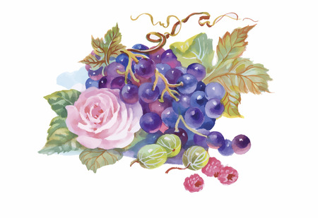 Hand drawn watercolor painting of grape and flower. Imagens - 45113681