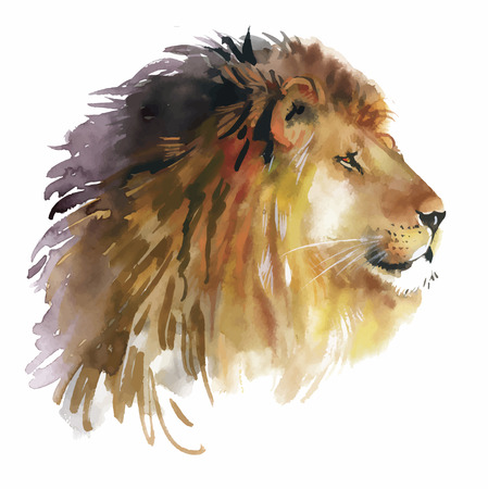 hand on the head: Watercolor lion on a white background vector.