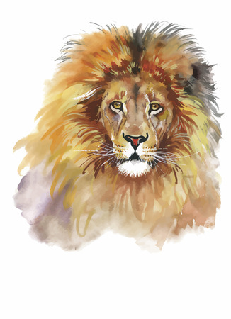 adorable: Watercolor lion on a white background vector.