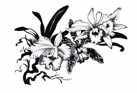 Line Drawing Flower Vector : Beautiful monochrome black and white flower isolated. hand drawn
