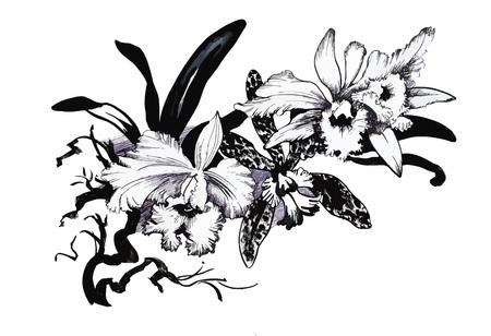 Hermoso blanco y negro, negro y flor blanca aislados. Líneas y trazos de contorno dibujados a mano Foto de archivo - 45113691