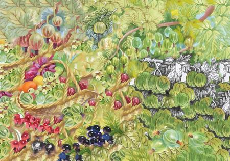 frutos rojos: Watercolor berries abstract background vector Vectores
