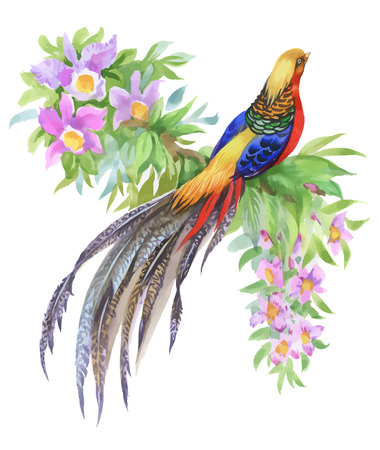 birds of paradise: Hand drawn pheasant in the grass and flowers, isolated on white background.