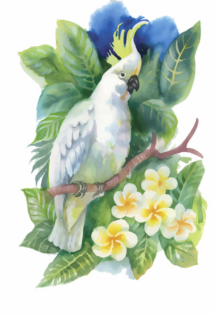 exotic: Watercolor wild exotic birds on flowers.