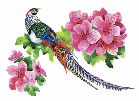 Hand drawn pheasant in the grass and flowers, isolated on white background.