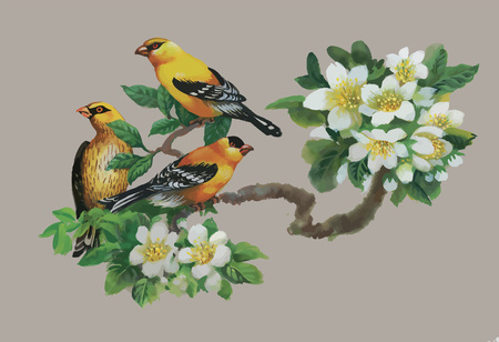 garden flowers: Watercolor wild exotic birds on flowers.