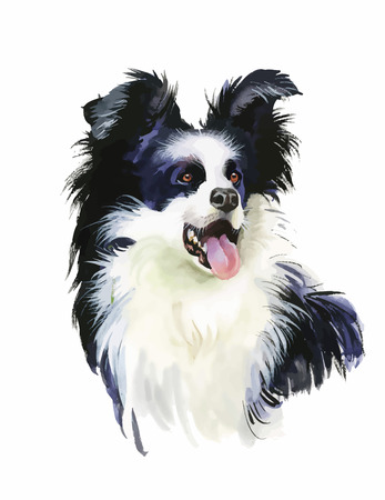collie: Border Collie Animal dog watercolor illustration isolated on white background vector.