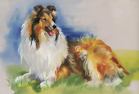 lassie: Collie Animal dog watercolor illustration vector. Illustration