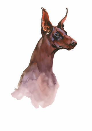 obedience: Doberman Animal dog watercolor illustration isolated on white background vector. Illustration