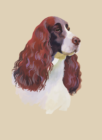 cocker: English cocker spaniel Animal dog watercolor illustration isolated on white background vector.