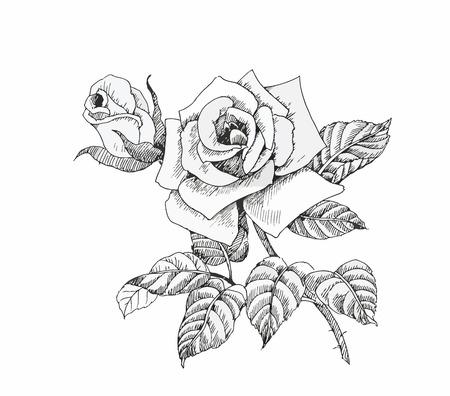 dibujos lineales: Hermoso blanco y negro, negro y flor blanca aislados. L�neas y trazos de contorno dibujados a mano