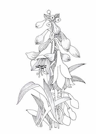 flor aislada: Hermoso blanco y negro, negro y flor blanca aislados. L�neas y trazos de contorno dibujados a mano