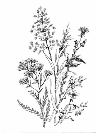 boceto: Hermoso blanco y negro, negro y flor blanca aislados. Líneas y trazos de contorno dibujados a mano