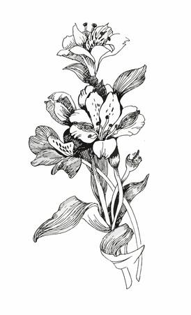 dessin fleur: Aquarelle fleurs dans un style classique sur un fond blanc. Illustration