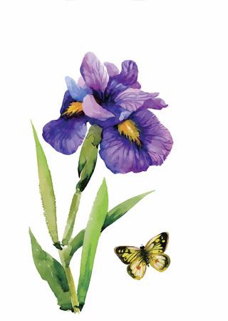 bouquet fleur: Aquarelle fleurs dans un style classique sur un fond blanc. Illustration