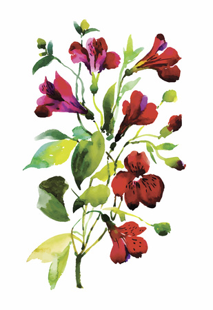 classical style: Watercolor flowers in a classical style on a white background.