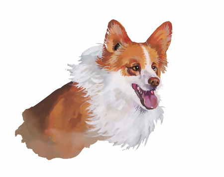 pembroke: Welsh corgi pembroke Animal dog watercolor illustration isolated on white background.