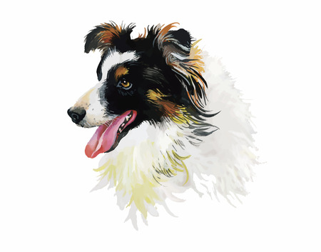 Border Collie Animal dog watercolor illustration isolated on white background vector.