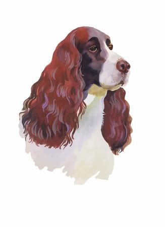 cocker: Englisch Cocker Spaniel Tierhundeaquarellillustration isoliert auf wei�em Hintergrund Vektor.