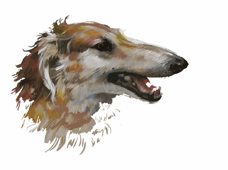 borzoi: Greyhound animal dog watercolor illustration.