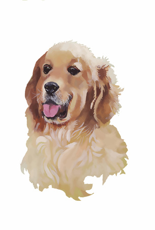 obedience: English cocker spaniel Animal dog watercolor illustration isolated on white background vector.