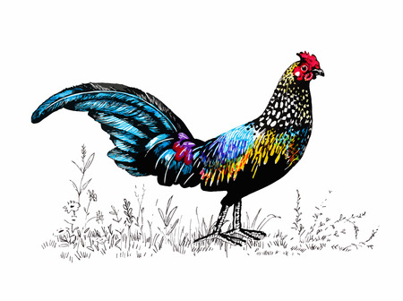 cockscomb: Pattern with farm rooster silhouette. Illustration